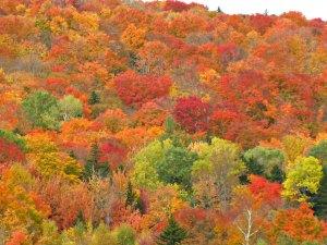 Vermont foliage, tripadvisor.com