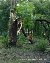 Falling Tree, phoebedecook.com