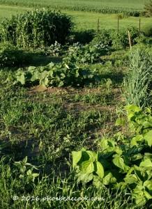 Green Garden, phoebedecook.com