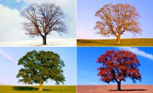 Trees in Seasons, 1stloveministry.com